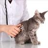 Ветеринарные клиники в Умете
